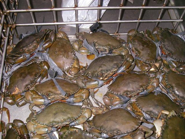 crab mentality essay help