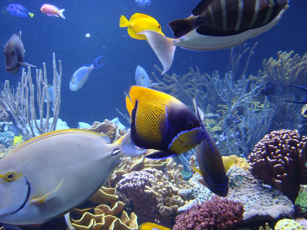 Atlantis Marine World Long Island