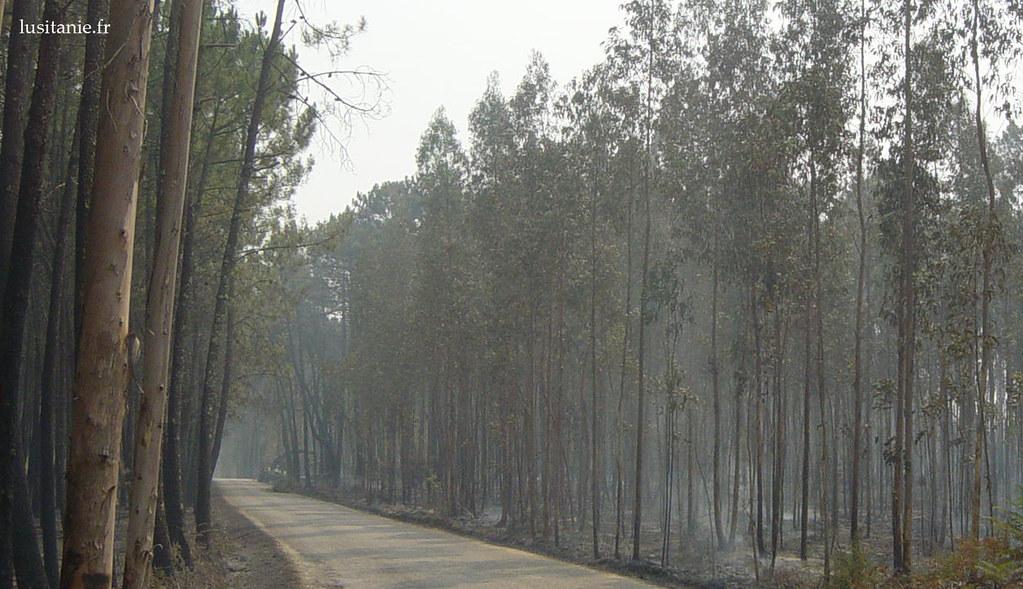 La terre fume encore, certaines racines sont toujours en train de brûler