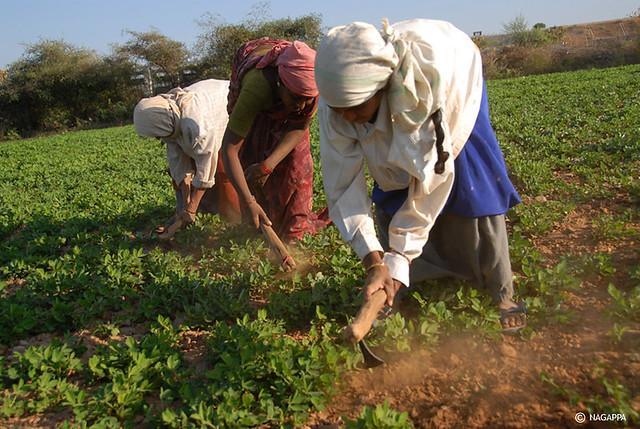 Agricultura | Mujeres trabajando en un campo de cultivo de ...