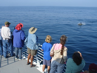 Whale Watchers aboard the Condor Express | by cybele-