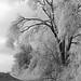 Icestorm in Missouri 2002