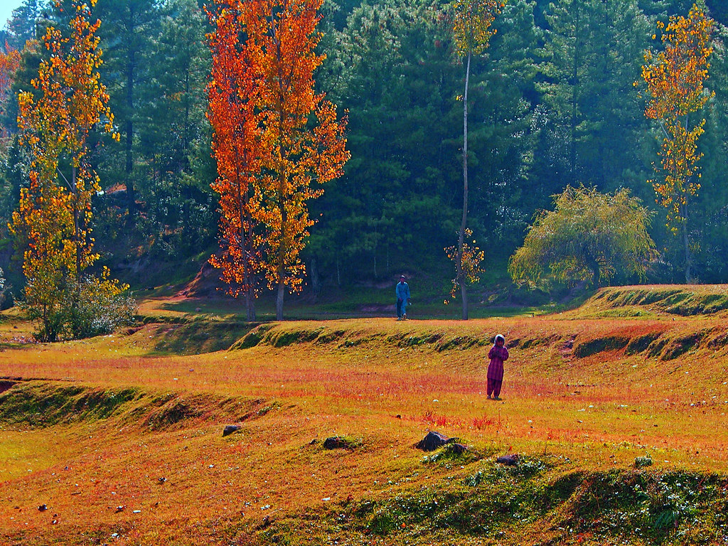 autumn in kashmir Amongst all the political strife and struggle, somewhere the essence of kashmir has been lost the toil and turmoil has taken such a great toll on the area, that even it's astounding magnificence has been lost along the way home to the wonderous chinar trees, the kashmir valley in autumn is a.