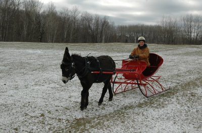 Jack driving his new sleigh | by Northern Community Radio