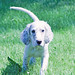 2011 06 25_Annies Puppies_3892_Lucas-1.jpg