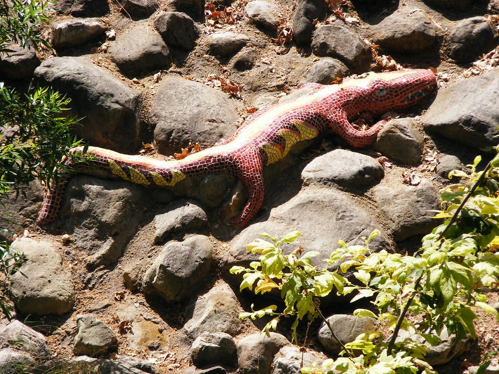 Lizard Red Rocky Nook Park Santa Barbara Alden