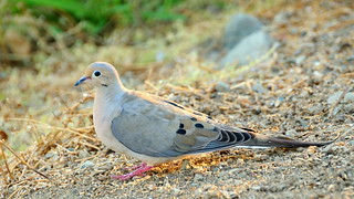 Dove by Almaden Lake | by donjd2