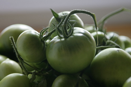 green-tomatoes-not-yet-fried | by JeremyOK