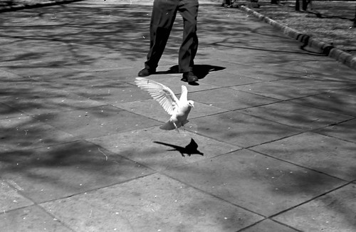 2206 Unidentified Pigeon 22 06