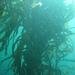 Kelp & Urchin Valley