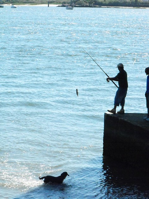 Feeding the dog guys fishing off the brigantine bridge for Brigantine fishing report