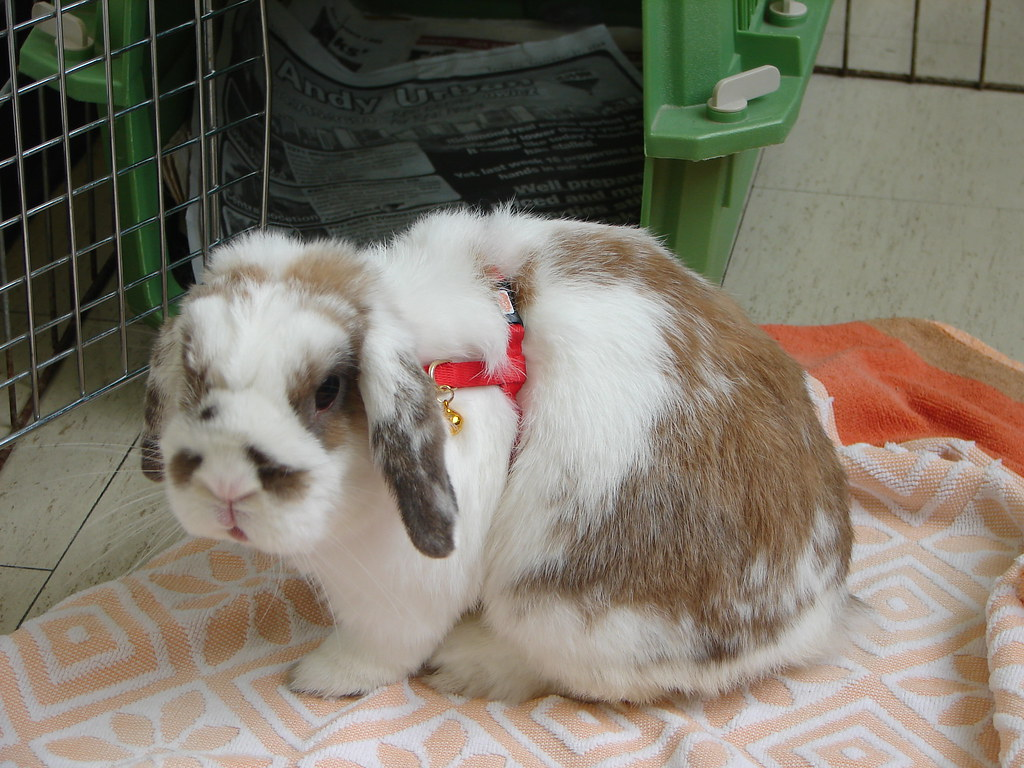 Bunny | The Vancouver House Rabbit Society festival. Oct ...