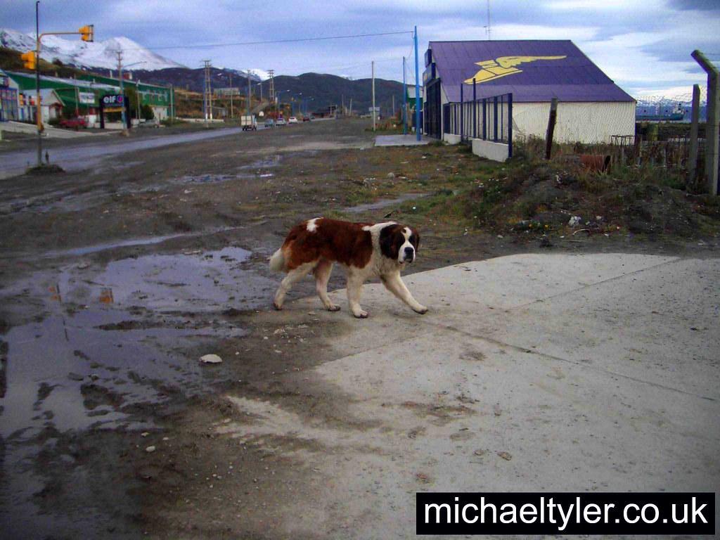 St Michael Dog Grooming