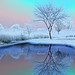 """""""A Colorful Winters Day"""""""