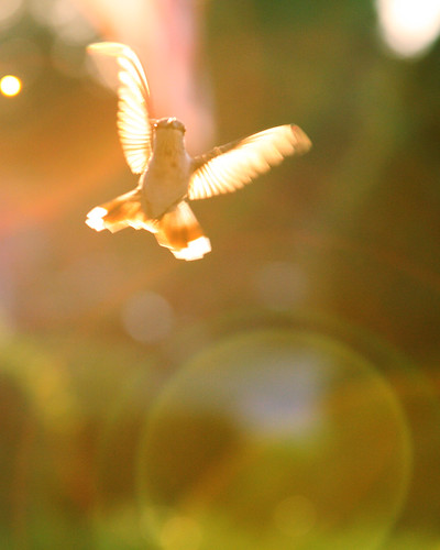 365:2 {hummingbird in motion} | by herreragirls {{Heidi}}