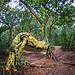 Árvore Cavalo | Tree Horse