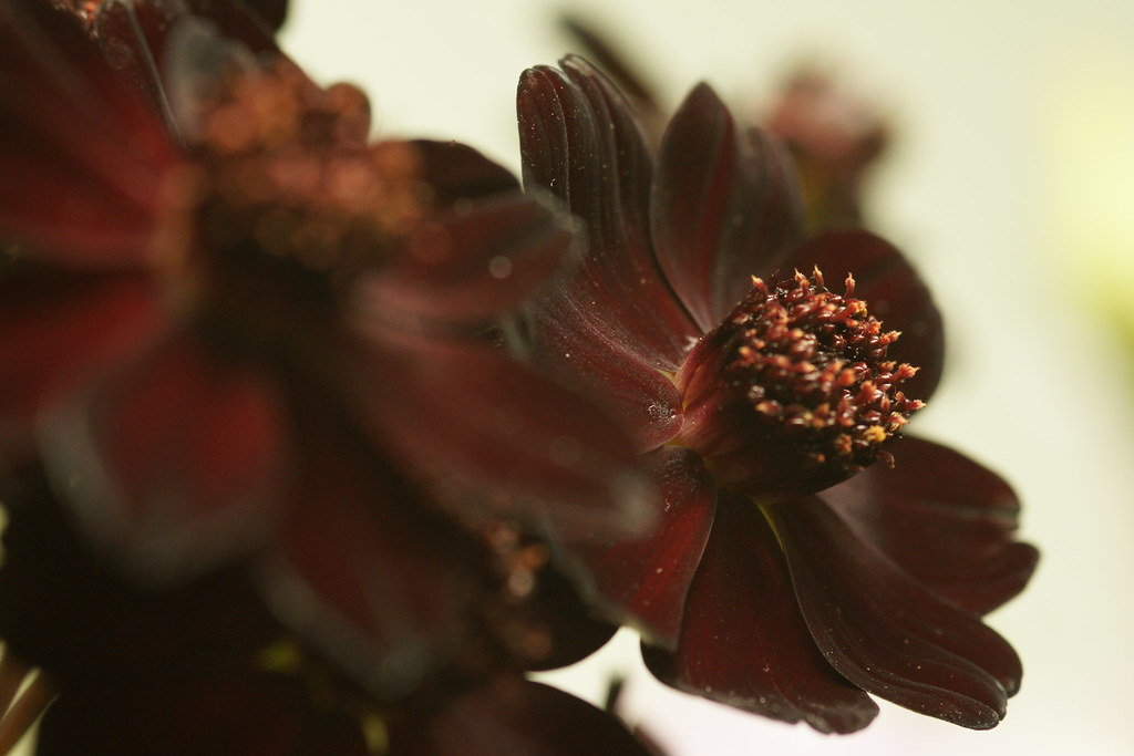 chanel flower wallpaper