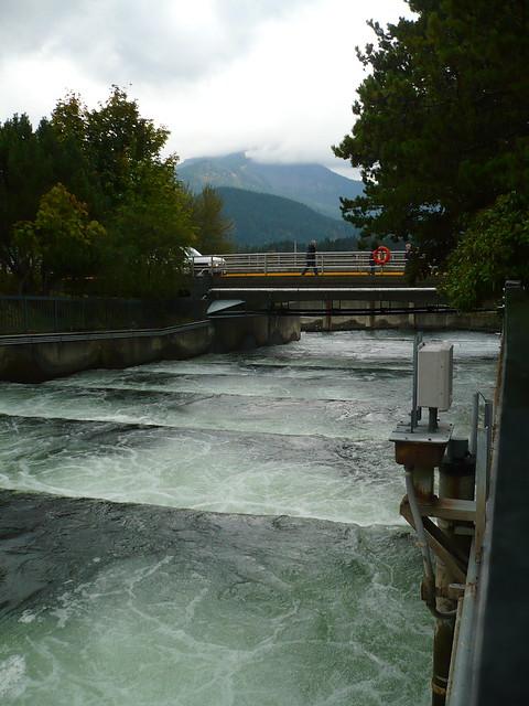 Bonneville dam fish ladder flickr photo sharing for Bonneville dam fish camera