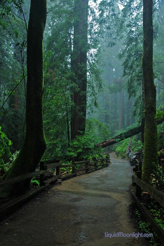 Redwoods - John Muir Woods -  A Rain Forest | by Darvin Atkeson