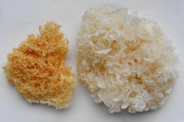 Как приготовить белые грибы китайские