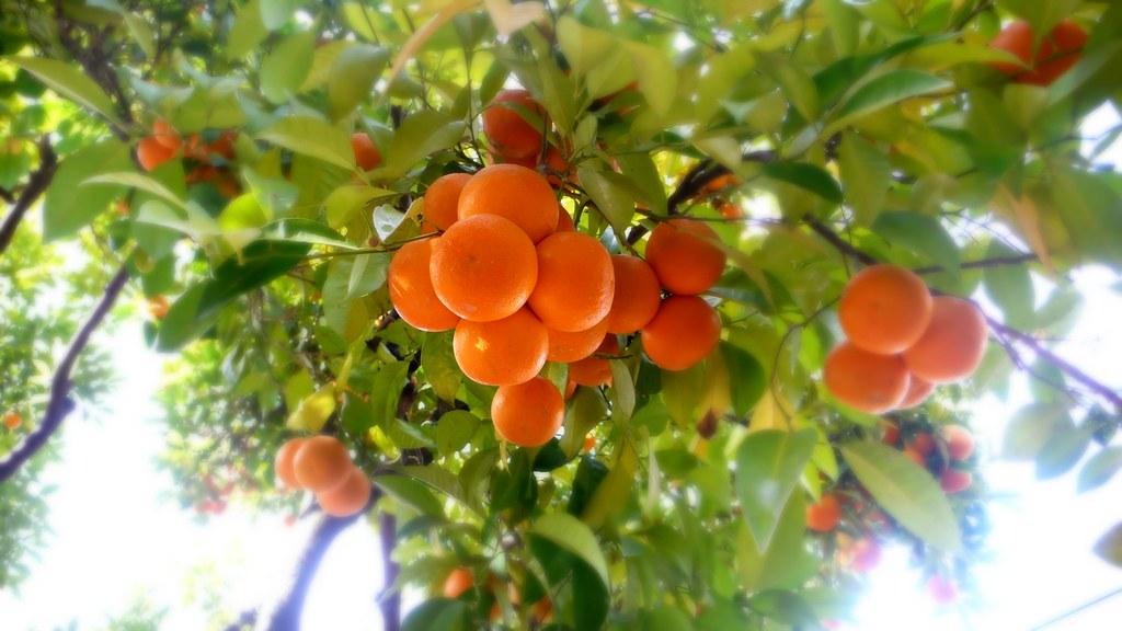 Orange Tree Cafe Menu Sterling Heights Mi
