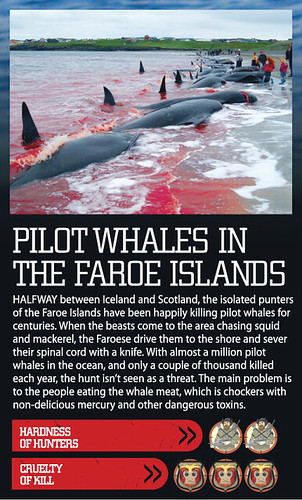 Mad Hunts: pilot whale in the Faroe Islands | A cruelty ...