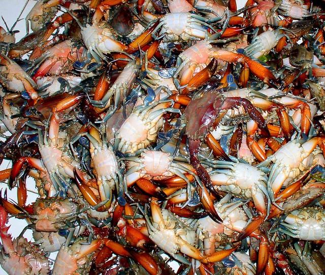 ... -wing or Kasag crabs | - Surigao City market, Mindanao, … | Flickr