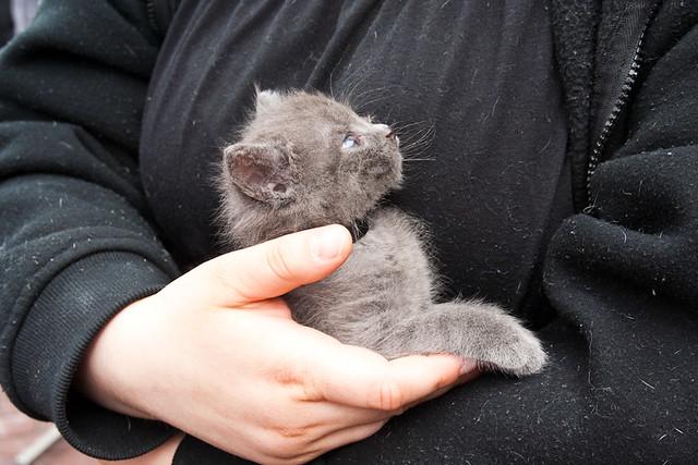 Grey Kitten 2011 Eastown Bizarre Bazaar June 11, 201119