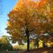 Oakwood Cemetery - Troy, NY - 14