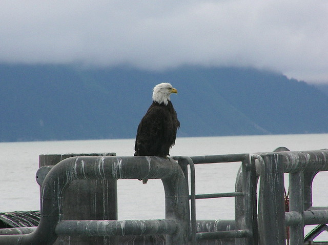 Major Marine Tours Seward Parking