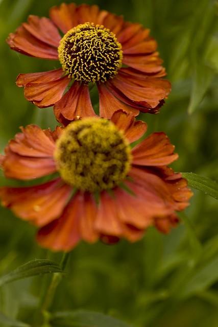 20080819 008761 1 Carl S English Jr Botanical Gardens H Flickr
