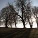 Shadowed Trees