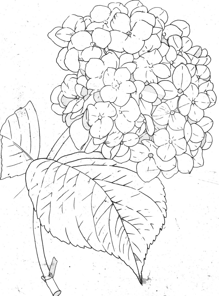 How To Draw A Peony Step By Step