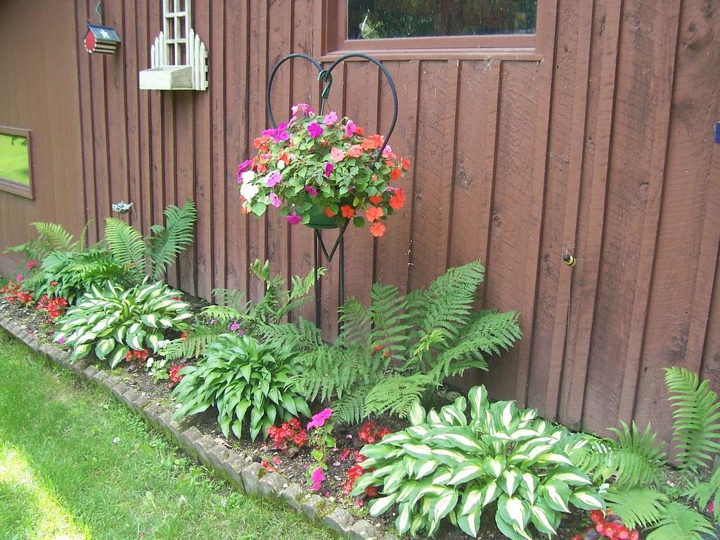 Shade flower bed hostas ferns impatiens kesky flickr for Shade flower garden designs
