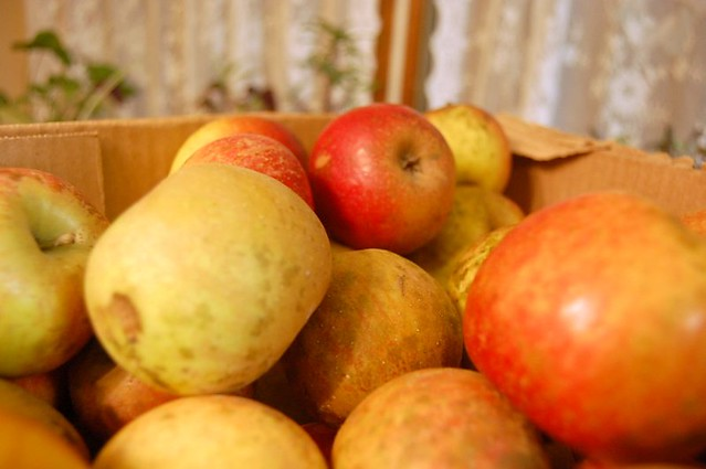 Wildcrafting: Wild apples should be judged by flavor, not by looks