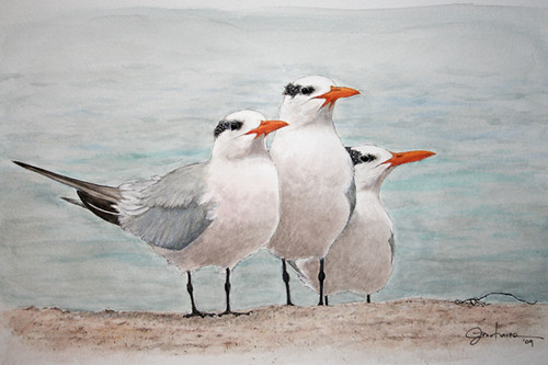 Royal terns in watercolor my first watercolor painting for My first watercolor painting