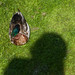 Duck and Shadow