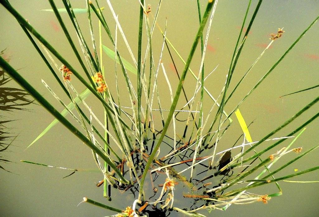 Feuiles exotiques plantes exotiques jardins des plantes for Jardin des plantes chambery