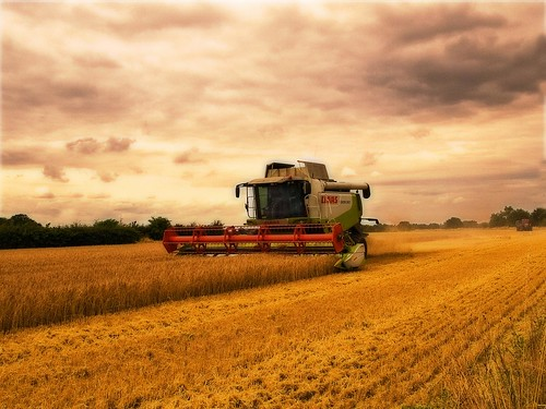 Harvest Time | by Gerry Balding