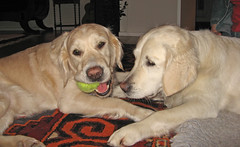 Hey Gina, give me my tennis ball please!!