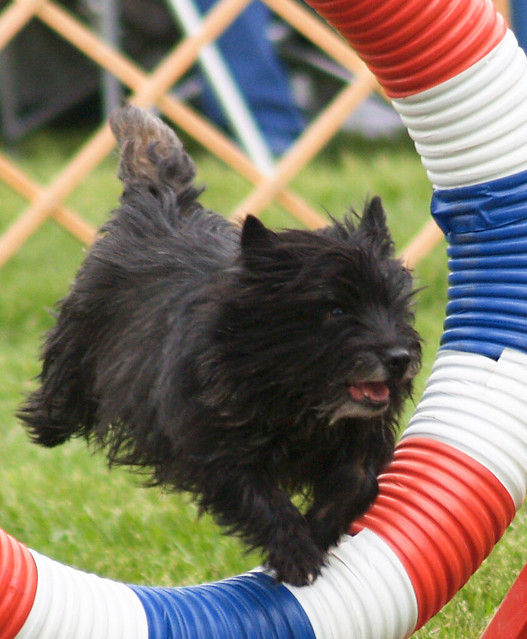 Black Dog Tire Lubricant Kingston On