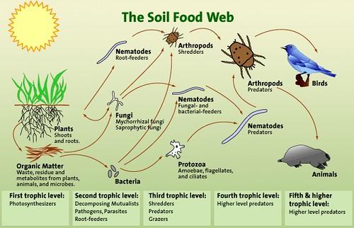 Food Web Diagram Template Free Fresy