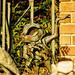 Disney - Pet Cemetery Toad
