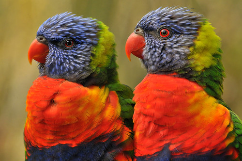 Lory's | by ucumari photography