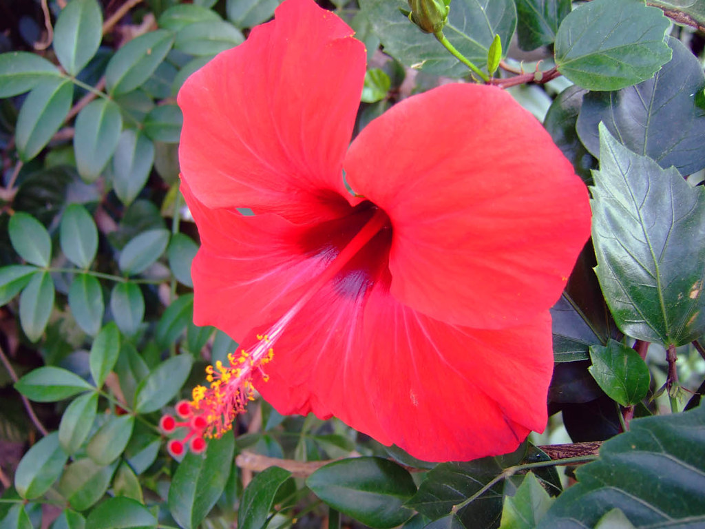 Spanish flowers Dustin Walruff