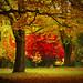Canadian Autumn | 2008 #01