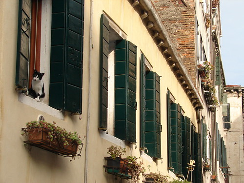 Cat in Venice | by RachaelMc