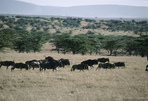 Animals roam on the plains | by World Bank Photo Collection