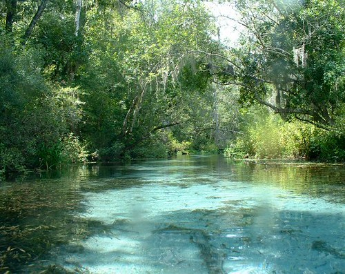 Ichetucknee River North End Went Snorkeling On The