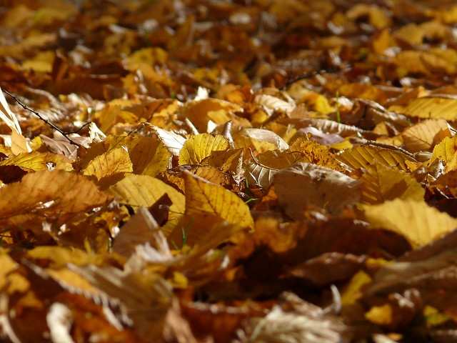 Tappeto di foglie  Flickr - Photo Sharing!